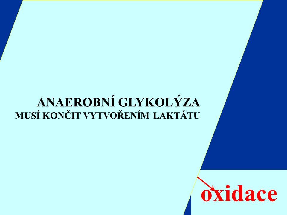 Glukóza Glykogen Glukóza 6-P Pyruvát Laktát oxidace ANAEROBNÍ GLYKOLÝZA MUSÍ KONČIT VYTVOŘENÍM LAKTÁTU