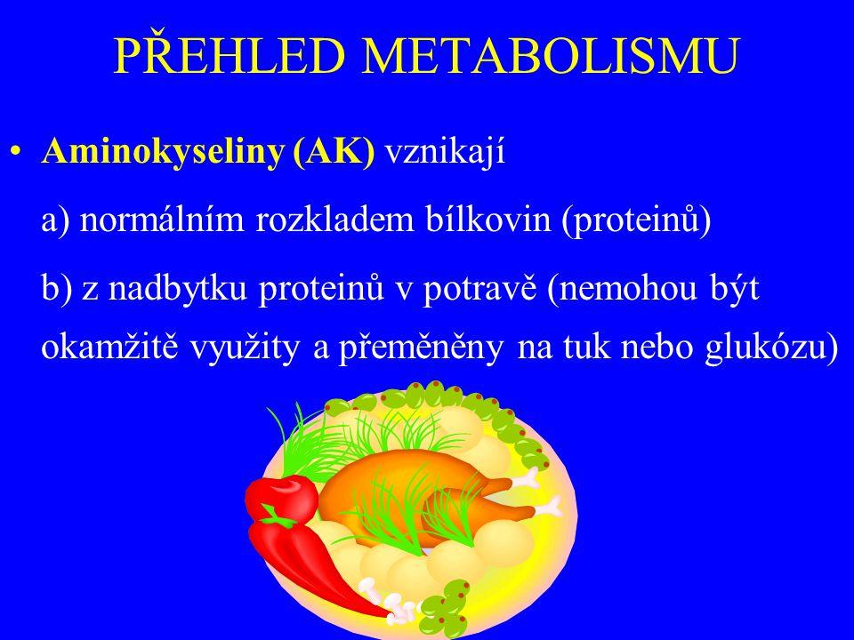 PŘEHLED METABOLISMU Aminokyseliny (AK) vznikají a) normálním rozkladem bílkovin (proteinů) b) z nadbytku proteinů v potravě (nemohou být okamžitě využity a přeměněny na tuk nebo glukózu)