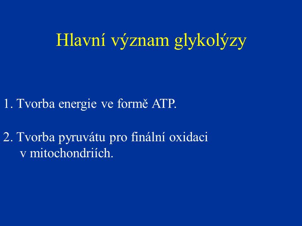Hlavní význam glykolýzy 1. Tvorba energie ve formě ATP. 2. Tvorba pyruvátu pro finální oxidaci v mitochondriích.