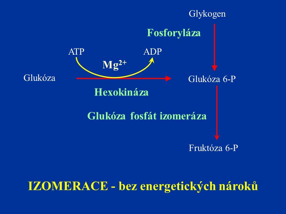 Glukóza Glykogen Glukóza 6-P Hexokináza ATPADP Fruktóza 6-P Glukóza fosfát izomeráza IZOMERACE - bez energetických nároků Mg 2+ Fosforyláza