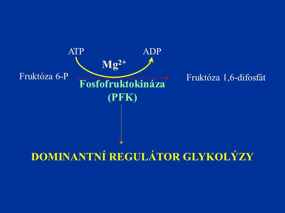 Fruktóza 6-P Fruktóza 1,6-difosfát Fosfofruktokináza (PFK) Mg 2+ ADPATP DOMINANTNÍ REGULÁTOR GLYKOLÝZY