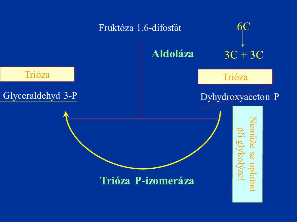 Fruktóza 1,6-difosfát Glyceraldehyd 3-P Dyhydroxyaceton P Aldoláza Trióza P-izomeráza Nemůže se uplatnit při glykolýze! Trióza 6C 3C + 3C