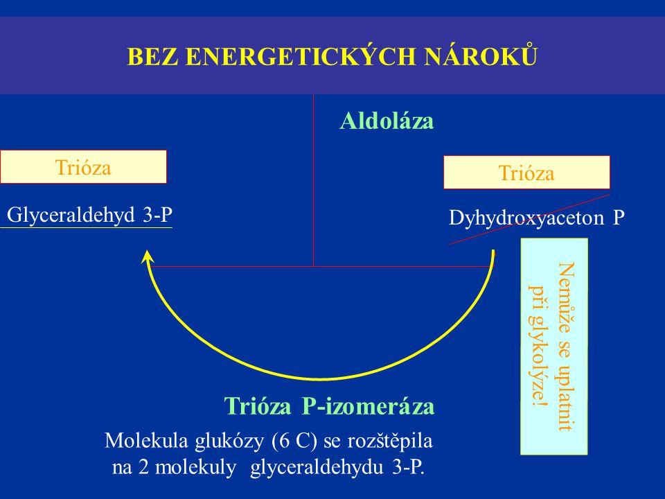 Fruktóza 1,6-difosfát Glyceraldehyd 3-P Dyhydroxyaceton P Aldoláza Trióza P-izomeráza Nemůže se uplatnit při glykolýze! Trióza BEZ ENERGETICKÝCH NÁROK