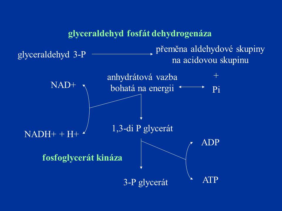 glyceraldehyd 3-P přeměna aldehydové skupiny na acidovou skupinu Pi anhydrátová vazba bohatá na energii NAD+ NADH+ + H+ 1,3-di P glycerát glyceraldehyd fosfát dehydrogenáza + 3-P glycerát ADP ATP fosfoglycerát kináza