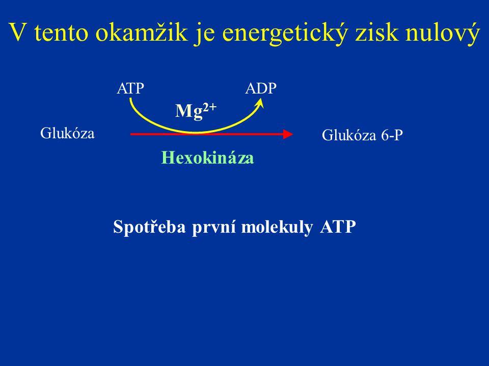 Glukóza Glukóza 6-P Hexokináza ATPADP Mg 2+ V tento okamžik je energetický zisk nulový Spotřeba první molekuly ATP