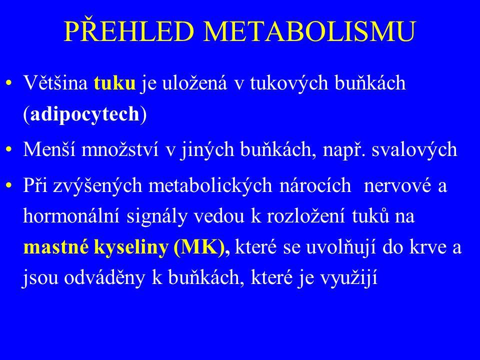 PŘEHLED METABOLISMU Většina tuku je uložená v tukových buňkách (adipocytech) Menší množství v jiných buňkách, např. svalových Při zvýšených metabolick