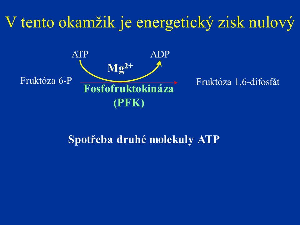 Fruktóza 6-P Fruktóza 1,6-difosfát Fosfofruktokináza (PFK) Mg 2+ ADPATP V tento okamžik je energetický zisk nulový Spotřeba druhé molekuly ATP