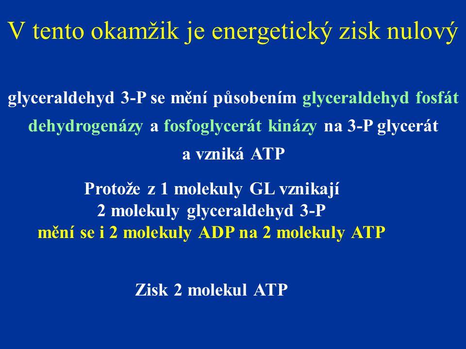 V tento okamžik je energetický zisk nulový glyceraldehyd 3-P se mění působením glyceraldehyd fosfát dehydrogenázy a fosfoglycerát kinázy na 3-P glycerát a vzniká ATP Protože z 1 molekuly GL vznikají 2 molekuly glyceraldehyd 3-P mění se i 2 molekuly ADP na 2 molekuly ATP Zisk 2 molekul ATP