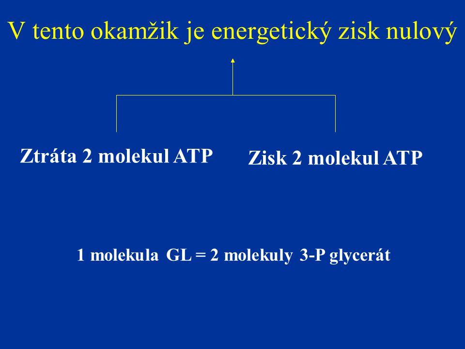 V tento okamžik je energetický zisk nulový Zisk 2 molekul ATP Ztráta 2 molekul ATP 1 molekula GL = 2 molekuly 3-P glycerát