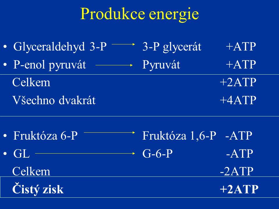 Produkce energie Glyceraldehyd 3-P3-P glycerát+ATP P-enol pyruvátPyruvát+ATP Celkem +2ATP Všechno dvakrát +4ATP Fruktóza 6-PFruktóza 1,6-P -ATP GLG-6-P-ATP Celkem -2ATP Čistý zisk +2ATP