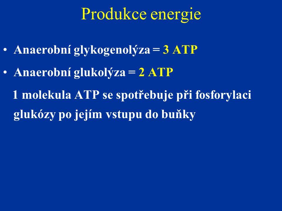 Produkce energie Anaerobní glykogenolýza = 3 ATP Anaerobní glukolýza = 2 ATP 1 molekula ATP se spotřebuje při fosforylaci glukózy po jejím vstupu do buňky