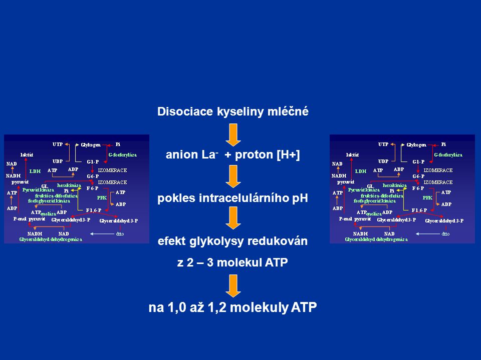 Disociace kyseliny mléčné anion La - + proton [H+] pokles intracelulárního pH efekt glykolysy redukován z 2 – 3 molekul ATP na 1,0 až 1,2 molekuly ATP
