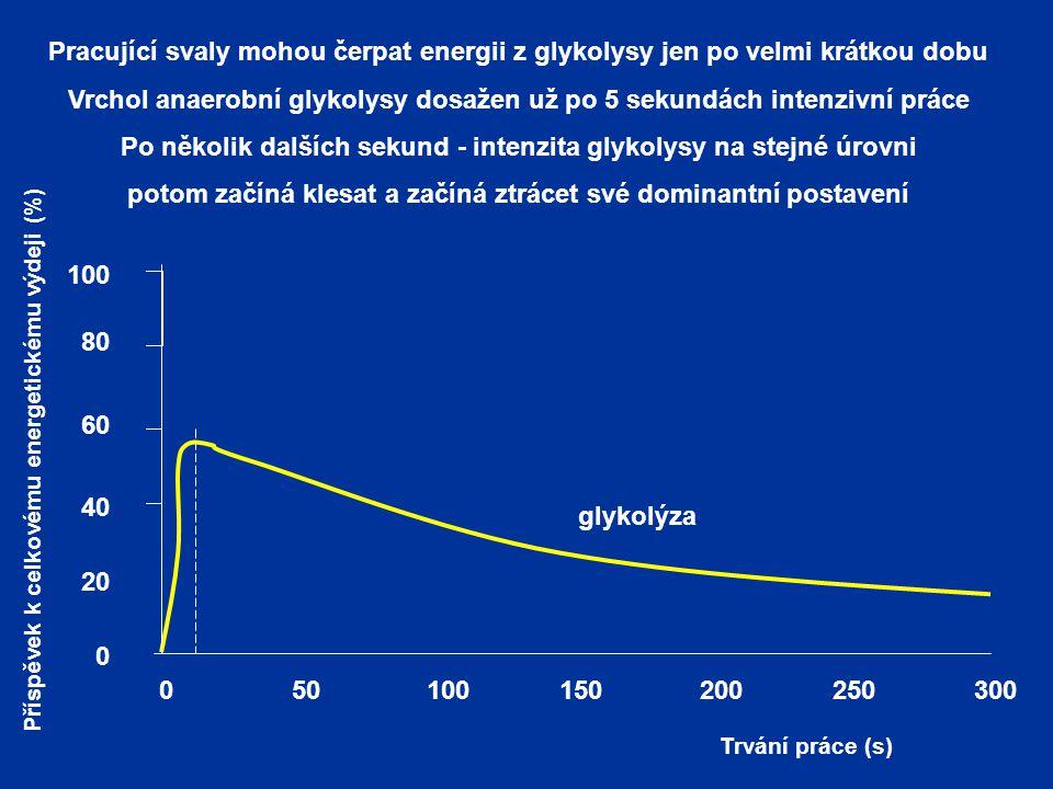 Pracující svaly mohou čerpat energii z glykolysy jen po velmi krátkou dobu Vrchol anaerobní glykolysy dosažen už po 5 sekundách intenzivní práce Po několik dalších sekund - intenzita glykolysy na stejné úrovni potom začíná klesat a začíná ztrácet své dominantní postavení 0 glykolýza Trvání práce (s) 100150200250300500 100 80 60 40 20 0 Příspěvek k celkovému energetickému výdeji (%)
