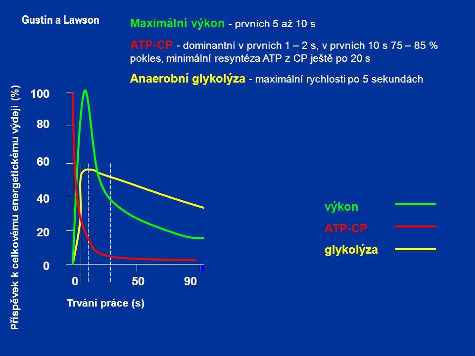 150200250500 100 80 60 40 20 0 Trvání práce (s) Gustin a Lawson 90 Maximální výkon - prvních 5 až 10 s ATP-CP - dominantní v prvních 1 – 2 s, v prvních 10 s 75 – 85 % pokles, minimální resyntéza ATP z CP ještě po 20 s Anaerobní glykolýza - maximální rychlosti po 5 sekundách výkon ATP-CP glykolýza Příspěvek k celkovému energetickému výdeji (%)