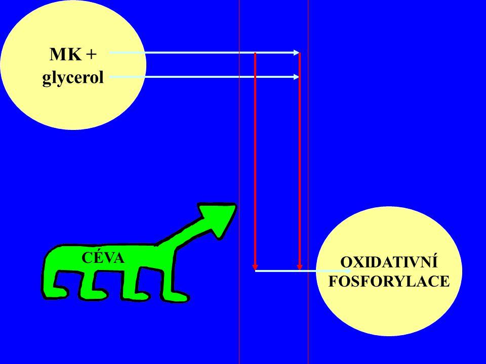 MK + glycerol OXIDATIVNÍ FOSFORYLACE CÉVA