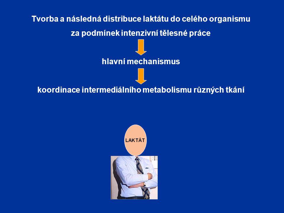 Tvorba a následná distribuce laktátu do celého organismu za podmínek intenzivní tělesné práce hlavní mechanismus koordinace intermediálního metabolism