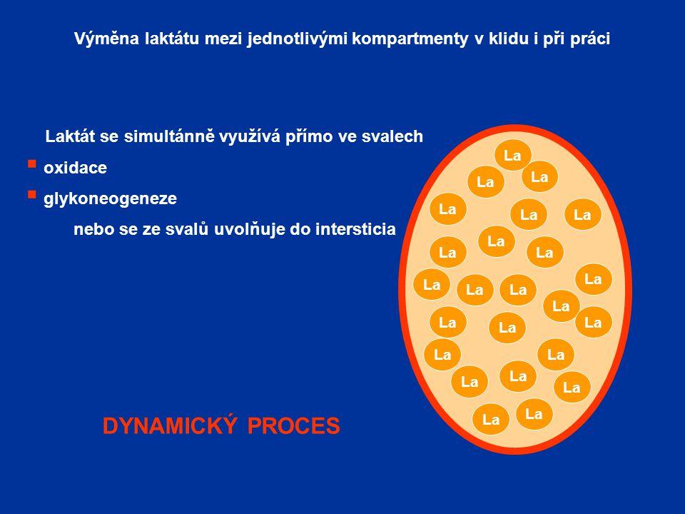 Výměna laktátu mezi jednotlivými kompartmenty v klidu i při práci dynamický proces La Laktát se simultánně využívá přímo ve svalech  oxidace  glykoneogeneze nebo se ze svalů uvolňuje do intersticia DYNAMICKÝ PROCES