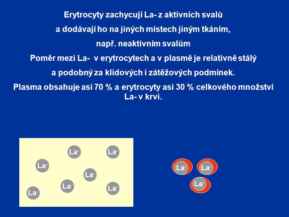 Erytrocyty zachycují La- z aktivních svalů a dodávají ho na jiných místech jiným tkáním, např. neaktivním svalům Poměr mezi La- v erytrocytech a v pla