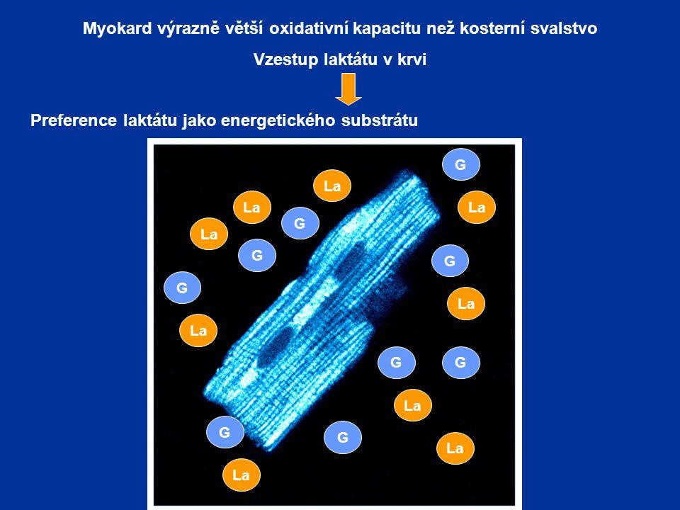 Myokard výrazně větší oxidativní kapacitu než kosterní svalstvo Vzestup laktátu v krvi Preference laktátu jako energetického substrátu (oxidace a glykoneogeneze) La G G G G G G G G G