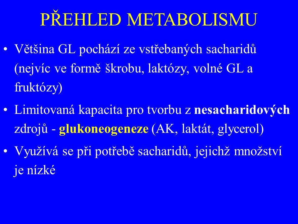 Většina GL pochází ze vstřebaných sacharidů (nejvíc ve formě škrobu, laktózy, volné GL a fruktózy) Limitovaná kapacita pro tvorbu z nesacharidových zdrojů - glukoneogeneze (AK, laktát, glycerol) Využívá se při potřebě sacharidů, jejichž množství je nízké
