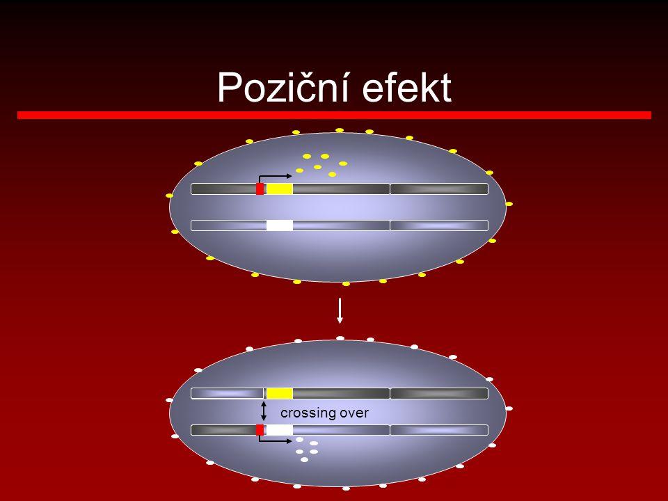 crossing over Poziční efekt