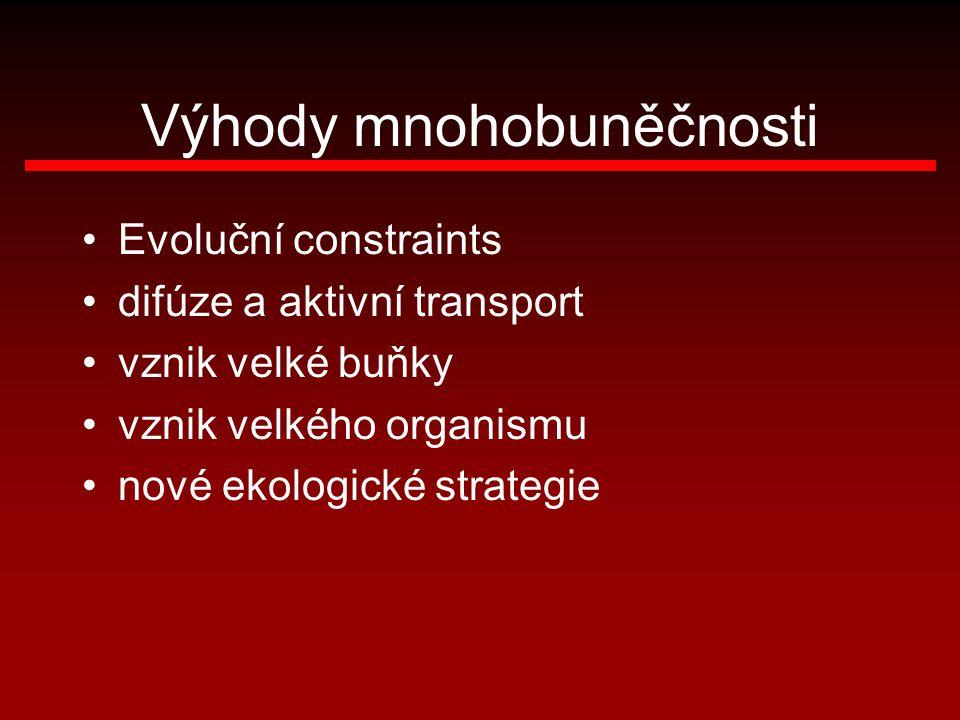 Výhody mnohobuněčnosti Evoluční constraints difúze a aktivní transport vznik velké buňky vznik velkého organismu nové ekologické strategie