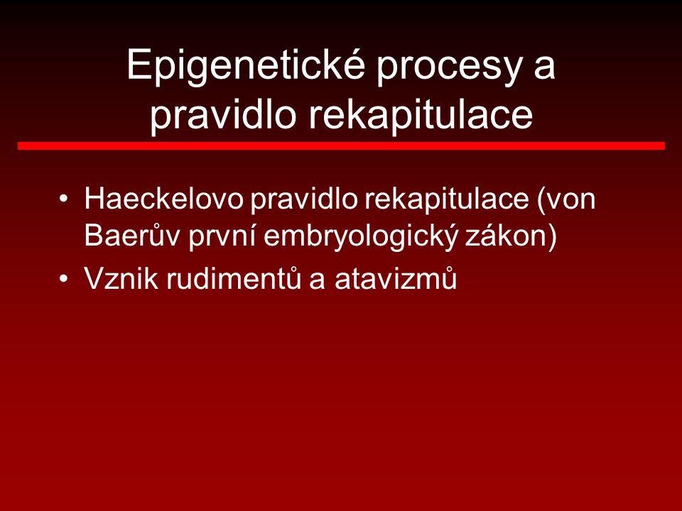 Epigenetické procesy a pravidlo rekapitulace Haeckelovo pravidlo rekapitulace (von Baerův první embryologický zákon) Vznik rudimentů a atavizmů