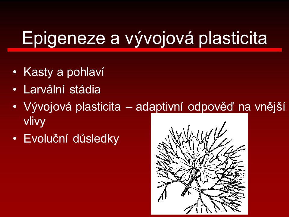 Epigeneze a vývojová plasticita Kasty a pohlaví Larvální stádia Vývojová plasticita – adaptivní odpověď na vnější vlivy Evoluční důsledky