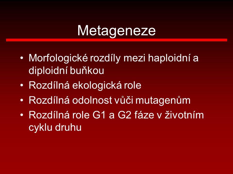 Metageneze Morfologické rozdíly mezi haploidní a diploidní buňkou Rozdílná ekologická role Rozdílná odolnost vůči mutagenům Rozdílná role G1 a G2 fáze
