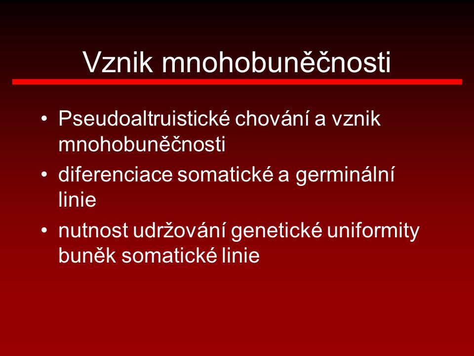 Vznik mnohobuněčnosti Pseudoaltruistické chování a vznik mnohobuněčnosti diferenciace somatické a germinální linie nutnost udržování genetické uniform