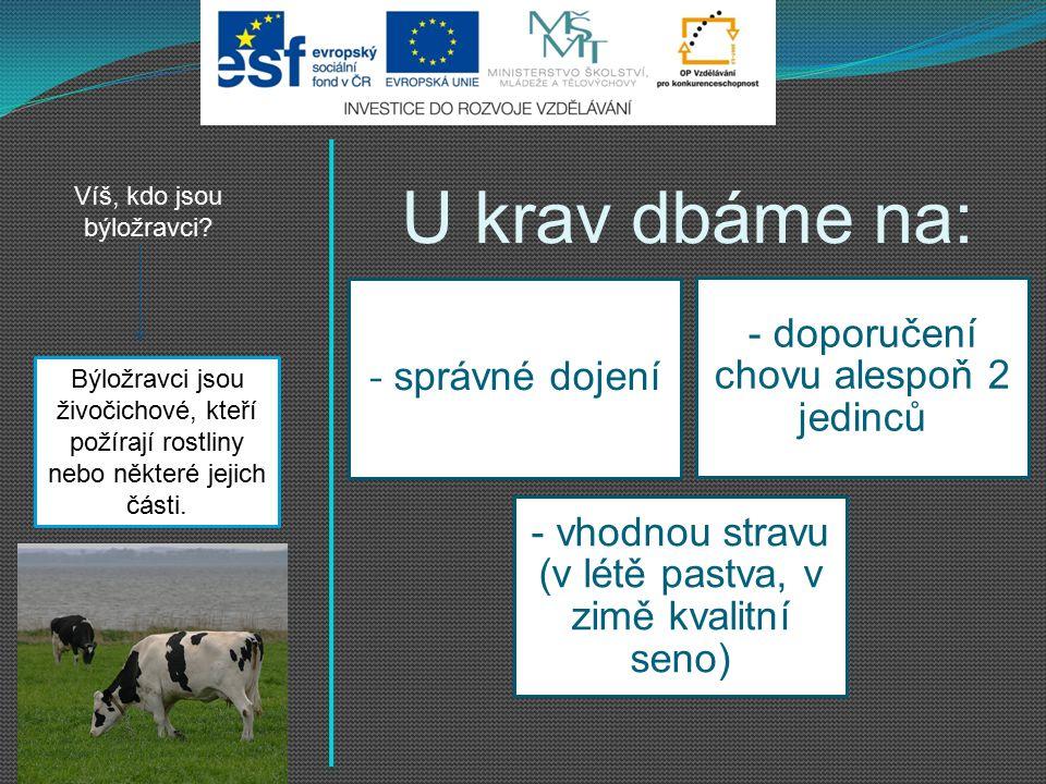 U krav dbáme na: - správné dojení - doporučení chovu alespoň 2 jedinců - vhodnou stravu (v létě pastva, v zimě kvalitní seno) Víš, kdo jsou býložravci