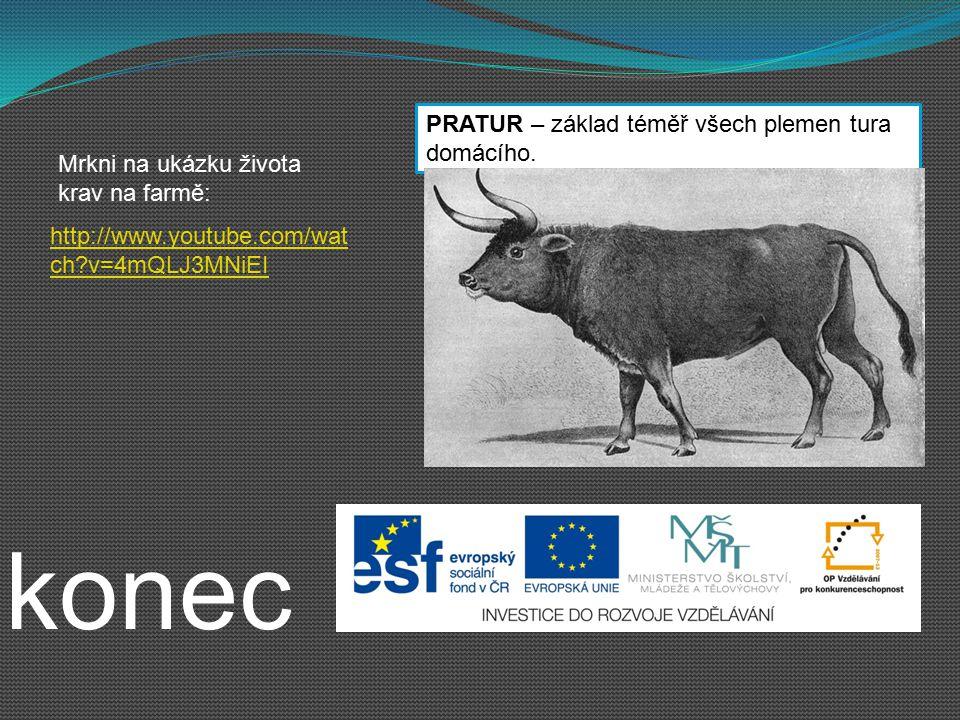 konec PRATUR – základ téměř všech plemen tura domácího. http://www.youtube.com/wat ch?v=4mQLJ3MNiEI Mrkni na ukázku života krav na farmě: