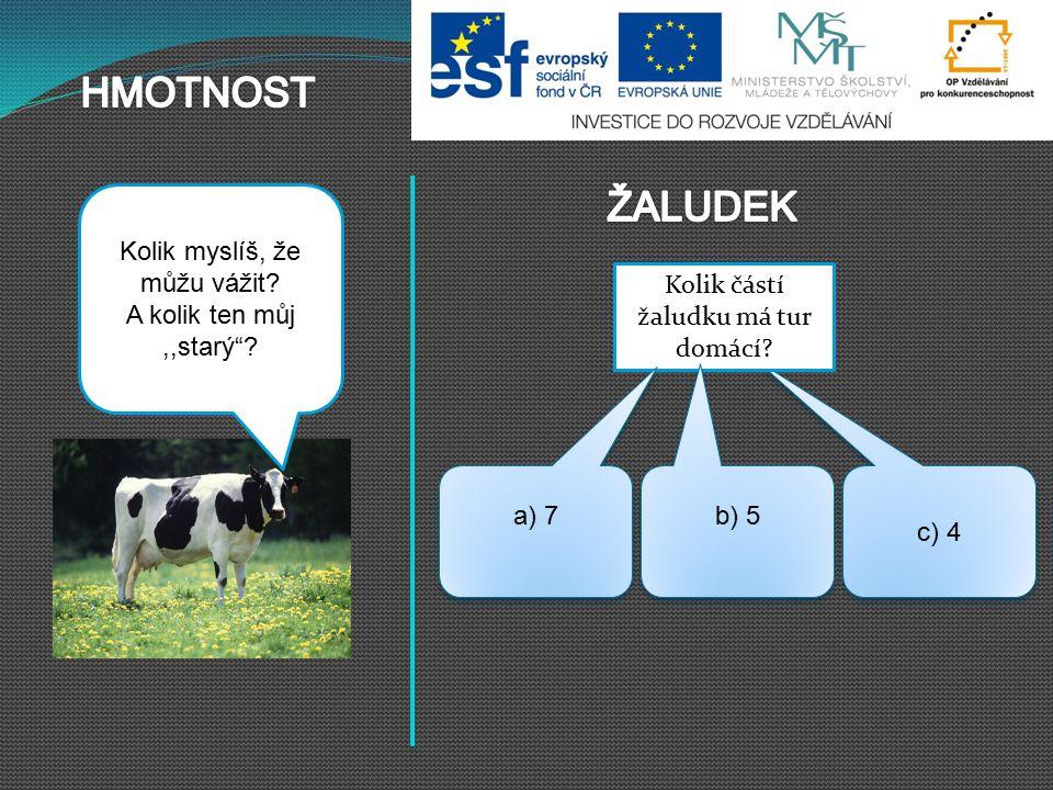 """c) 4 Kolik částí žaludku má tur domácí? Kráva může vážit 380 – 850 kg, býk i dvojnásobek. Kolik myslíš, že můžu vážit? A kolik ten můj,,starý""""? b) 5 a"""