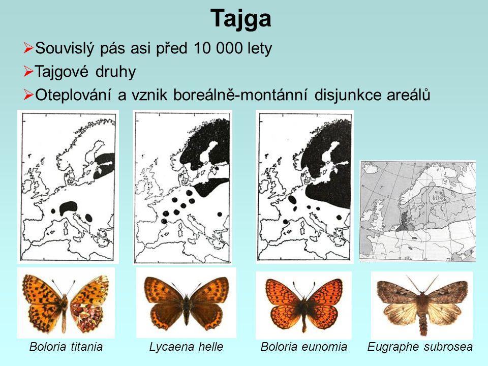 Boloria titania Eugraphe subroseaBoloria eunomiaLycaena helle Tajga  Souvislý pás asi před 10 000 lety  Tajgové druhy  Oteplování a vznik boreálně-montánní disjunkce areálů