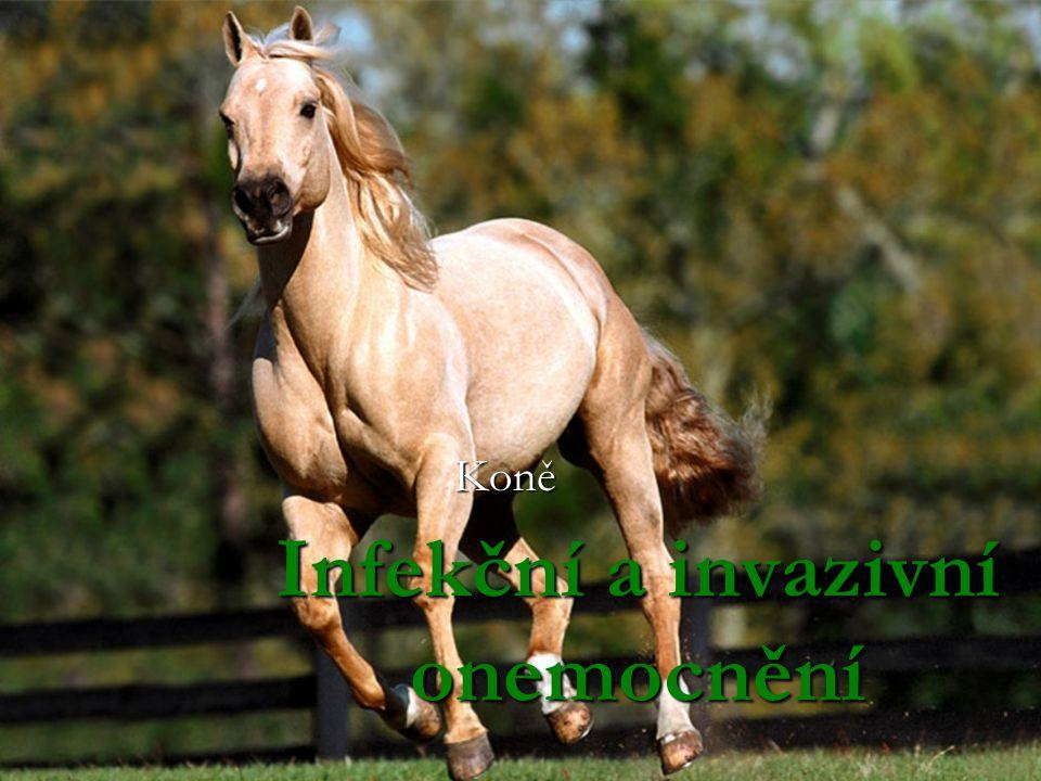 Infekční a invazivní onemocnění Koně