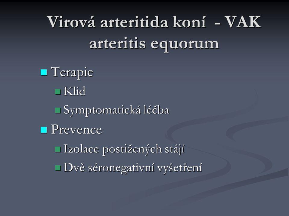 Virová arteritida koní - VAK arteritis equorum Terapie Terapie Klid Klid Symptomatická léčba Symptomatická léčba Prevence Prevence Izolace postižených stájí Izolace postižených stájí Dvě séronegativní vyšetření Dvě séronegativní vyšetření