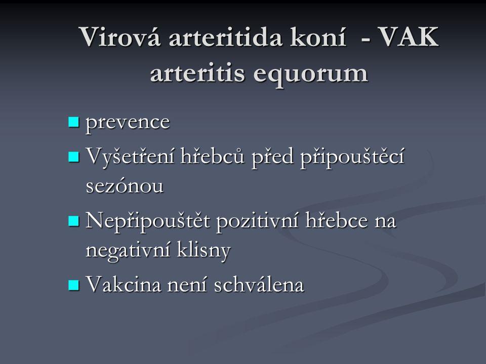 Virová arteritida koní - VAK arteritis equorum prevence prevence Vyšetření hřebců před připouštěcí sezónou Vyšetření hřebců před připouštěcí sezónou N