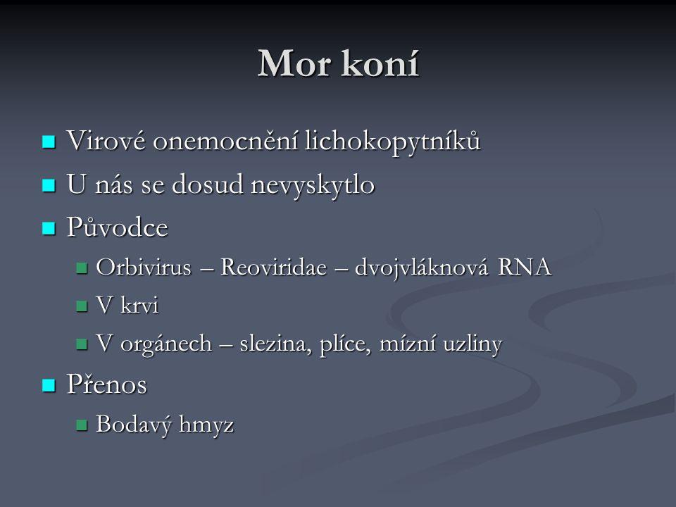 Mor koní Virové onemocnění lichokopytníků Virové onemocnění lichokopytníků U nás se dosud nevyskytlo U nás se dosud nevyskytlo Původce Původce Orbivir