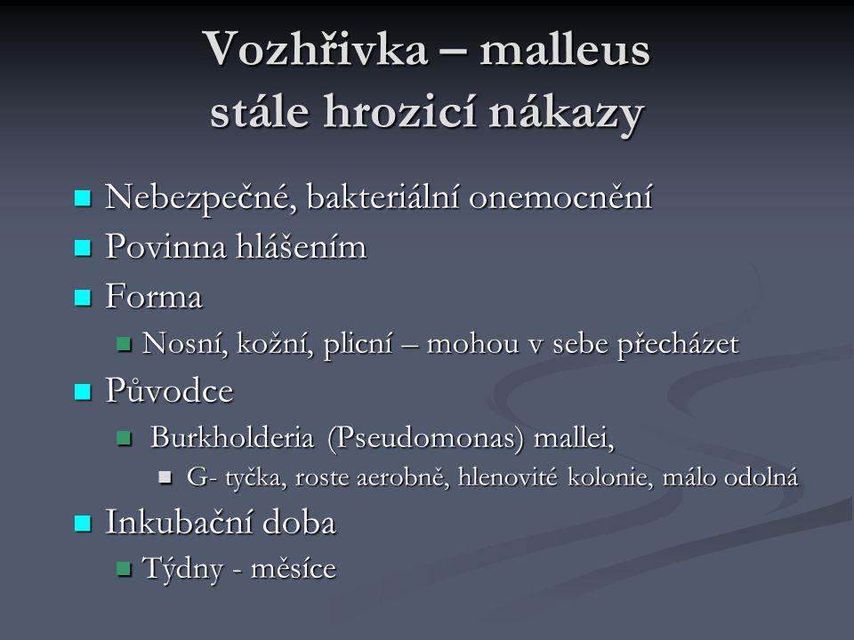 Vozhřivka – malleus stále hrozicí nákazy Nebezpečné, bakteriální onemocnění Nebezpečné, bakteriální onemocnění Povinna hlášením Povinna hlášením Forma