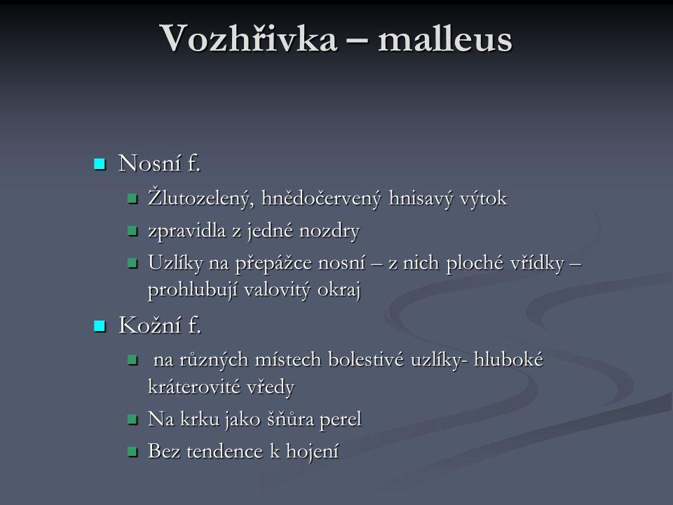 Vozhřivka – malleus Nosní f. Nosní f. Žlutozelený, hnědočervený hnisavý výtok Žlutozelený, hnědočervený hnisavý výtok zpravidla z jedné nozdry zpravid