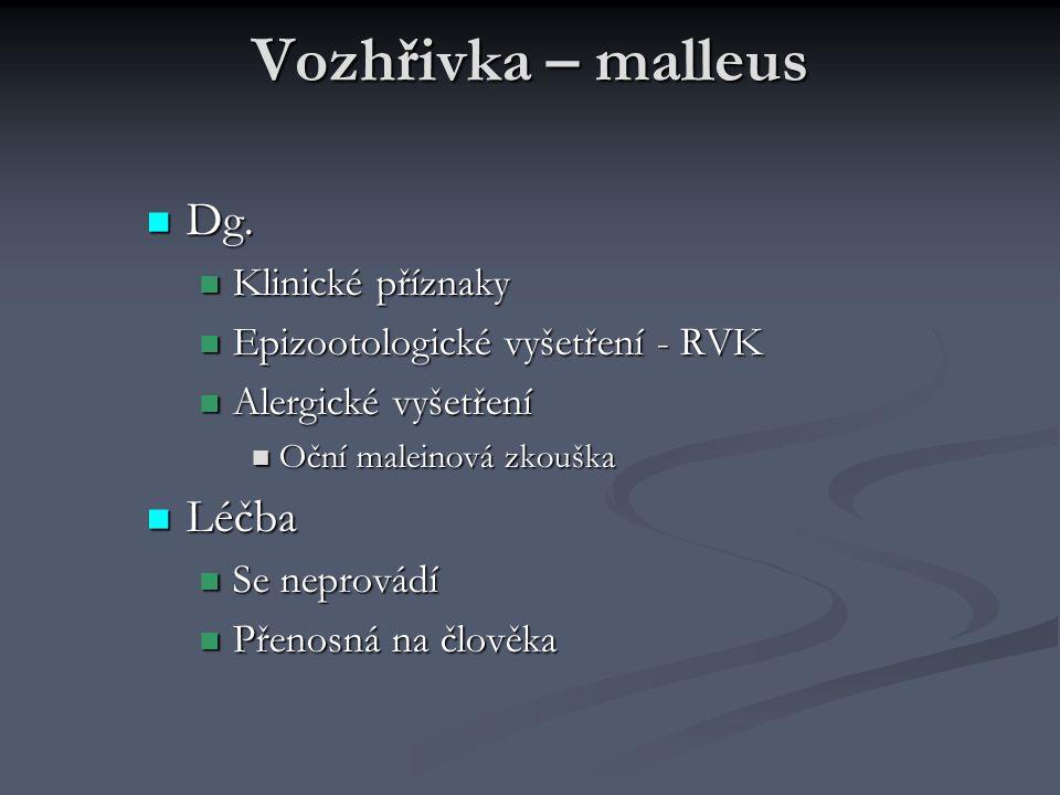 Vozhřivka – malleus Dg. Dg. Klinické příznaky Klinické příznaky Epizootologické vyšetření - RVK Epizootologické vyšetření - RVK Alergické vyšetření Al
