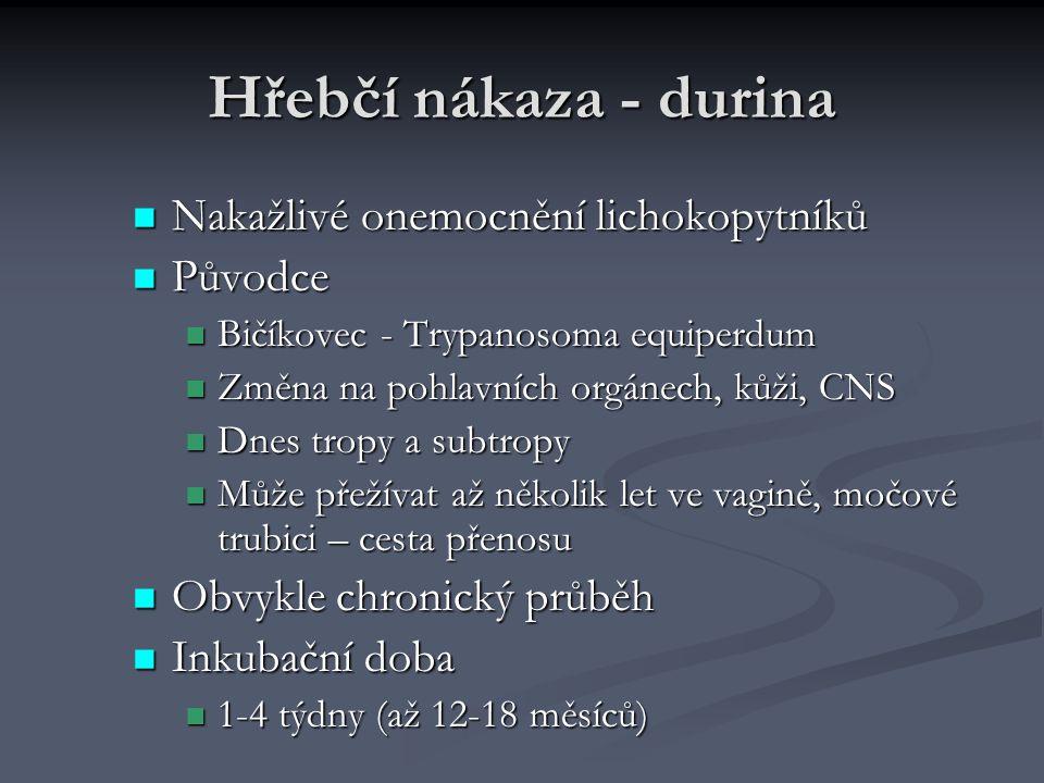 Hřebčí nákaza - durina Nakažlivé onemocnění lichokopytníků Nakažlivé onemocnění lichokopytníků Původce Původce Bičíkovec - Trypanosoma equiperdum Bičí