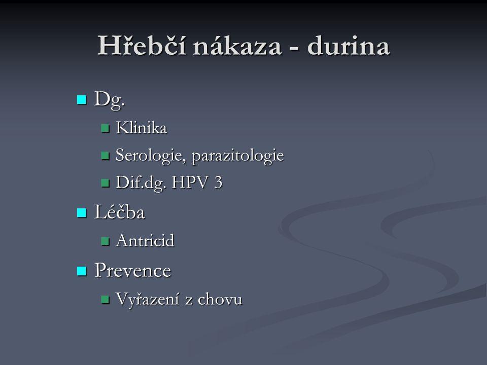 Hřebčí nákaza - durina Dg. Dg. Klinika Klinika Serologie, parazitologie Serologie, parazitologie Dif.dg. HPV 3 Dif.dg. HPV 3 Léčba Léčba Antricid Antr
