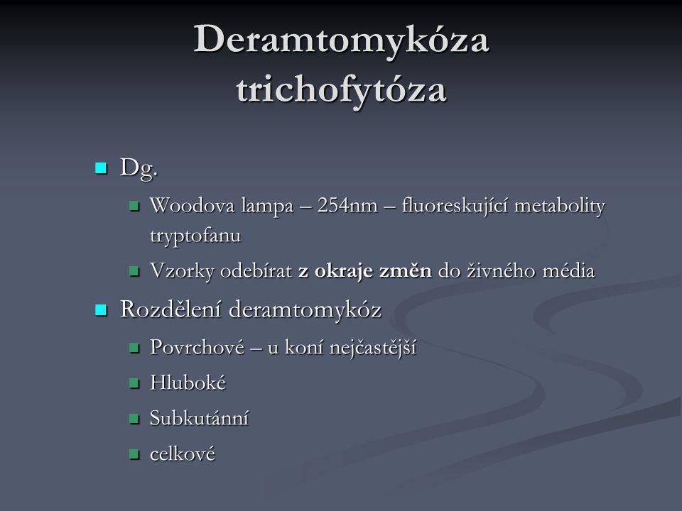 Deramtomykóza trichofytóza Dg.Dg.