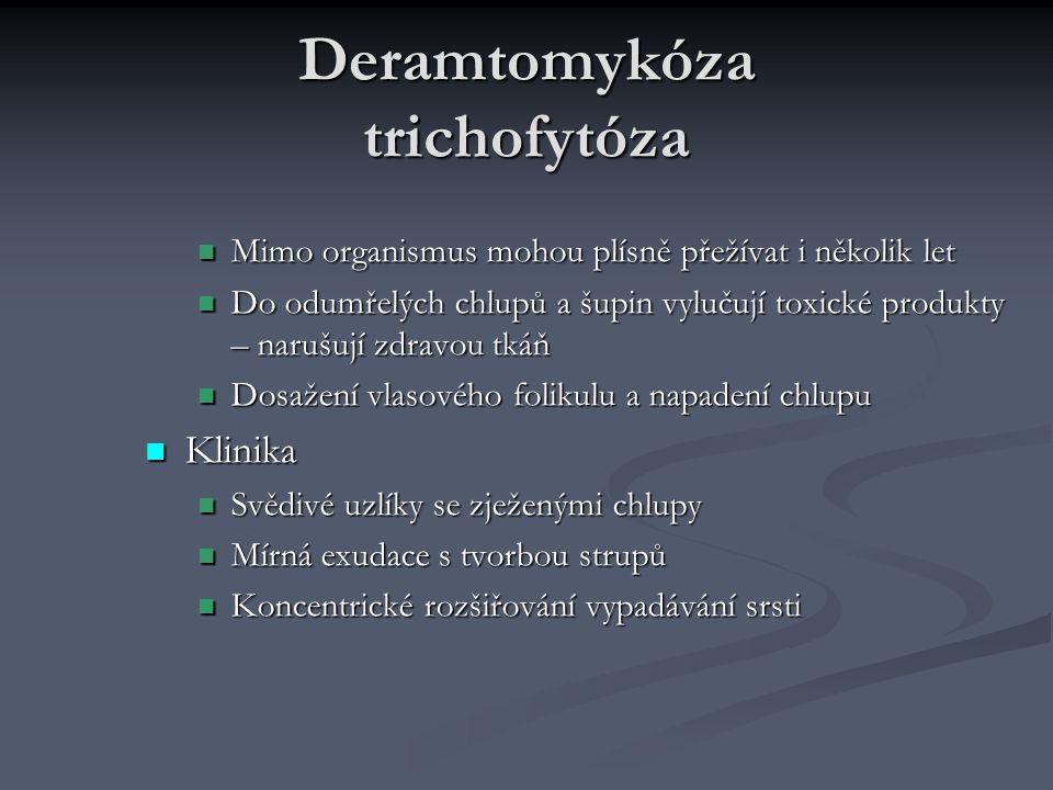 Deramtomykóza trichofytóza Mimo organismus mohou plísně přežívat i několik let Mimo organismus mohou plísně přežívat i několik let Do odumřelých chlup