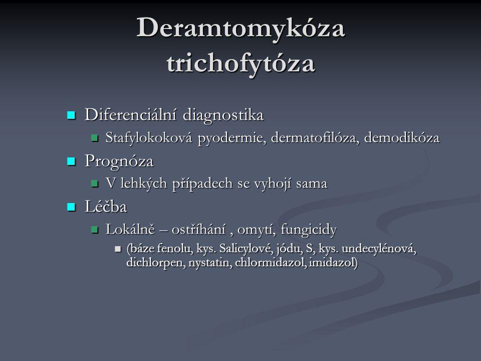 Deramtomykóza trichofytóza Diferenciální diagnostika Diferenciální diagnostika Stafylokoková pyodermie, dermatofilóza, demodikóza Stafylokoková pyoder