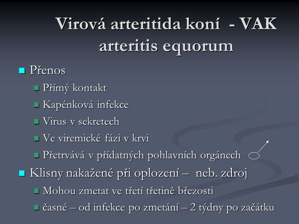 Virová arteritida koní - VAK arteritis equorum Přenos Přenos Přímý kontakt Přímý kontakt Kapénková infekce Kapénková infekce Virus v sekretech Virus v