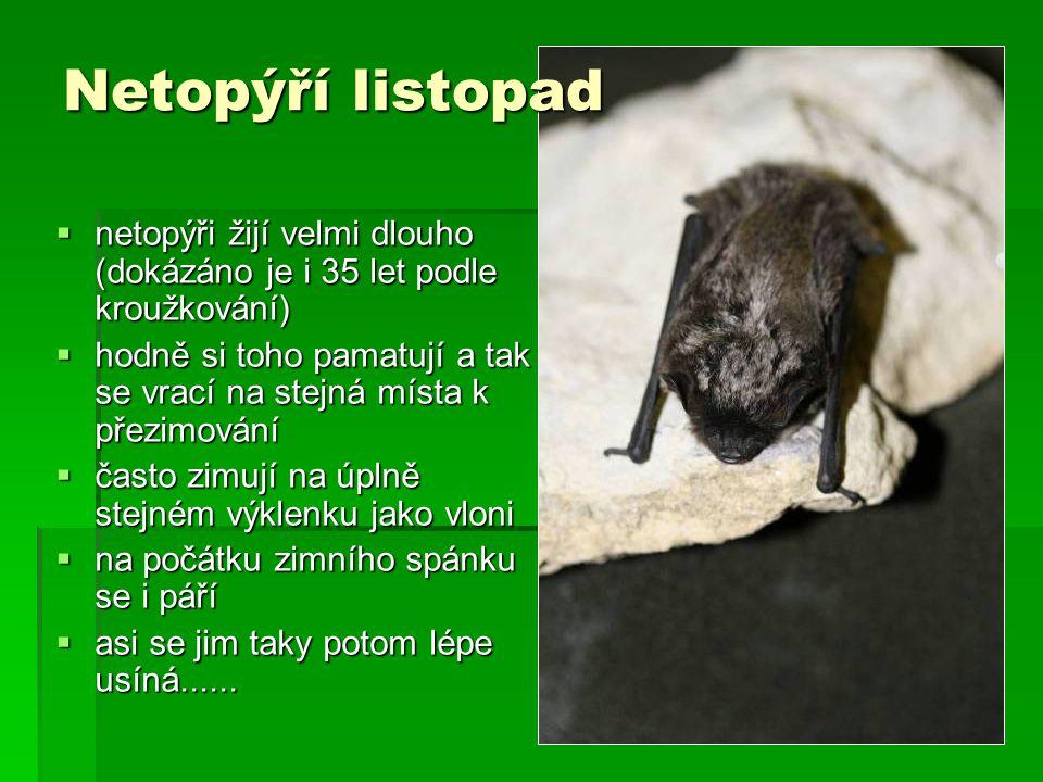  netopýři žijí velmi dlouho (dokázáno je i 35 let podle kroužkování)  hodně si toho pamatují a tak se vrací na stejná místa k přezimování  často zi