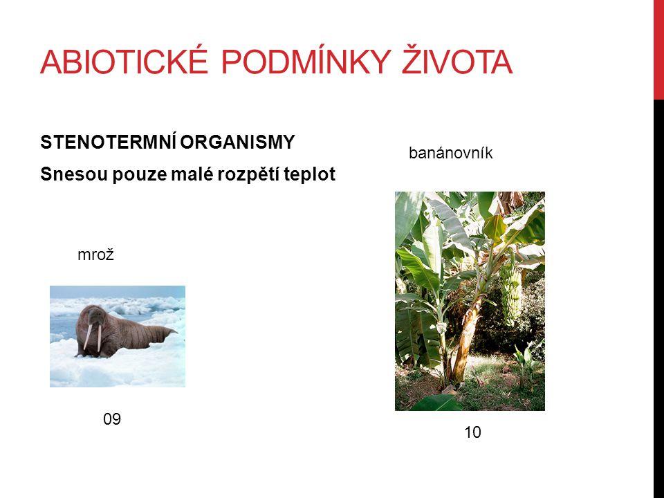 ABIOTICKÉ PODMÍNKY ŽIVOTA STENOTERMNÍ ORGANISMY Snesou pouze malé rozpětí teplot 09 mrož 10 banánovník