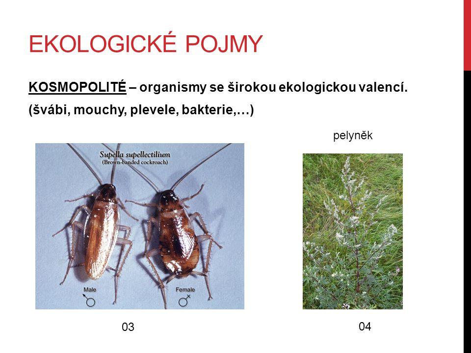 EKOLOGICKÉ POJMY KOSMOPOLITÉ – organismy se širokou ekologickou valencí. (švábi, mouchy, plevele, bakterie,…) 03 04 pelyněk